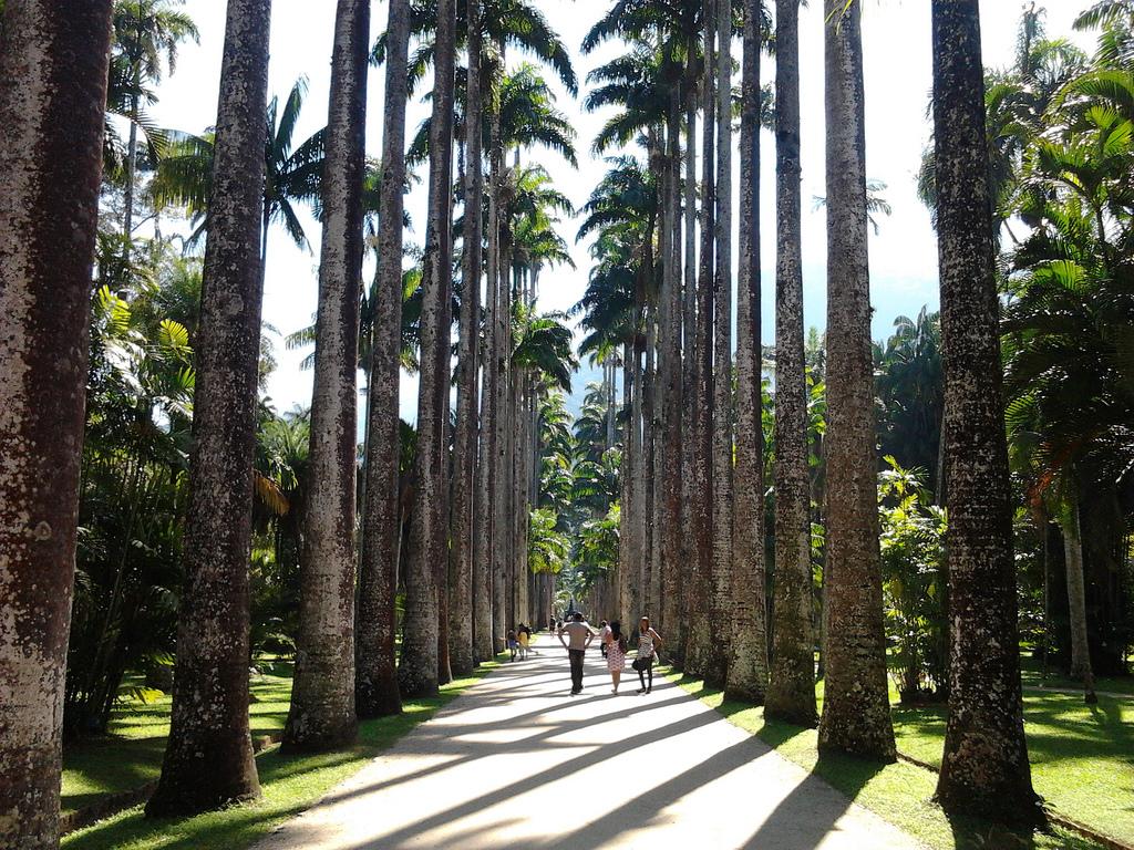Jardin Botanico: Situado al oeste del barrio de Lagoa , el Jardín Botánico de Río de Janeiro, o Jardim Botanico , alberga a más de 8.000 especies de plantas. Construido a principios de 1800, el jardín cuenta con muchos ejemplares, incluyendo las mas altas palmeras. Los visitantes acuden al parque para ver las 600 especies de orquídeas. El jardín cuenta con una serie de monumentos y fuentes, incluyendo un jardín japonés, un estanque lleno de nenúfares un museo, donde se muestran exposiciones que se centran en el medio ambiente.
